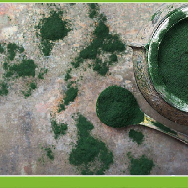 A spirulina alga tápanyag összetétele